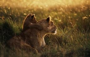 закат, фотография, глубина резкости, трава, любовь
