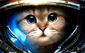 humor, cat, astronaut, James Raynor, StarCraft, space