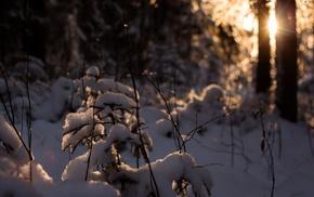 bokeh, nature, sunlight, winter, lens flare, snow