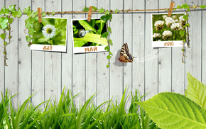 butterfly, greenery, fence