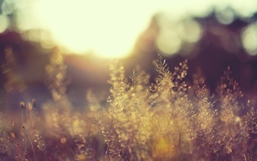 sunlight, blurred, nature, plants, landscape