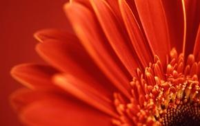 macro, flower, flowers, petals