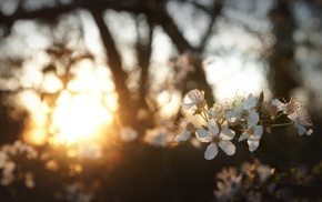 sunlight, depth of field, nature, bokeh, flowers, white flowers