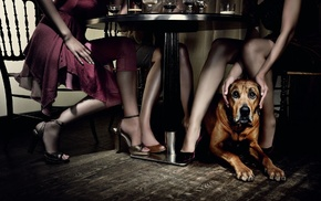 creative, girls, table, dog, legs