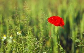 flower, flowers, greenery, grass