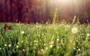 grass, nature, water drops