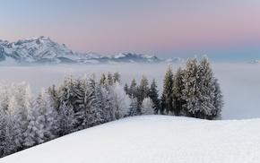 лес, снег, природа, горы, туман