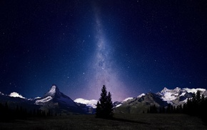 trees, starry night, mountain, stars, sky
