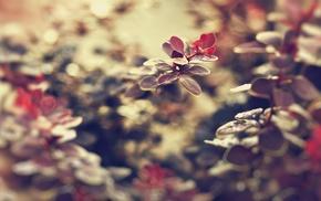 листья, глубина резкости, макро