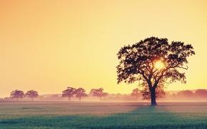 деревья, трава, солнечный свет