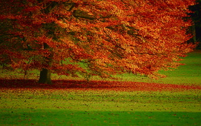 foliage, autumn, tree