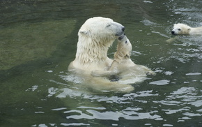 bears, animals, water, tenderness