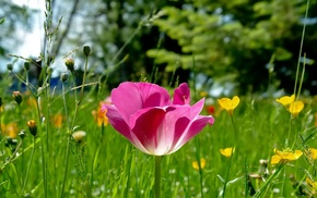 pink, flowers, nature, glade, grass