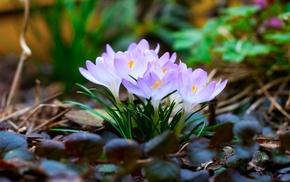 spring, macro, flowers, leaves