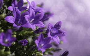 plant, flowers, motion blur, macro, drops