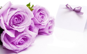 background, flowers, roses