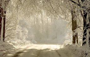 twigs, nature, road, winter, trees