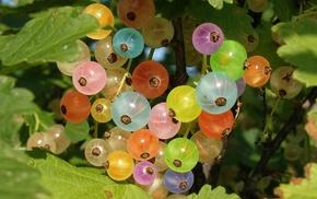nature, rainbow, berries, colors
