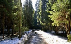nature, spring, road, snow, Christmas tree