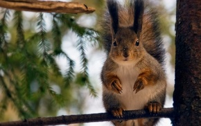 animals, tree, squirrel, forest