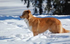 dog, winter, snow, animals