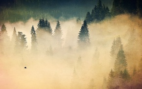 nature, fall, mist, trees, forest