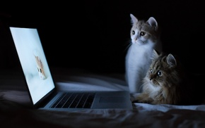 cat, humor, laptop, bed