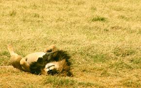 rest, grass, lying down, field, animals