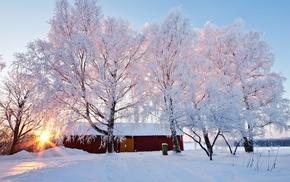 snow, nature, sunrise, trees